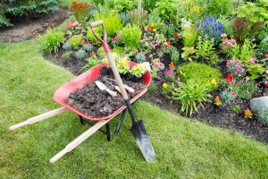 Garden work being done landscaping a flowerbed with a red wheelbarrow full of organic potting soil and celosia seedlings standing with a spade on a manicured lawn alongside a bed of colorful flowers
